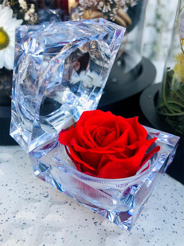 rose éternelle mini